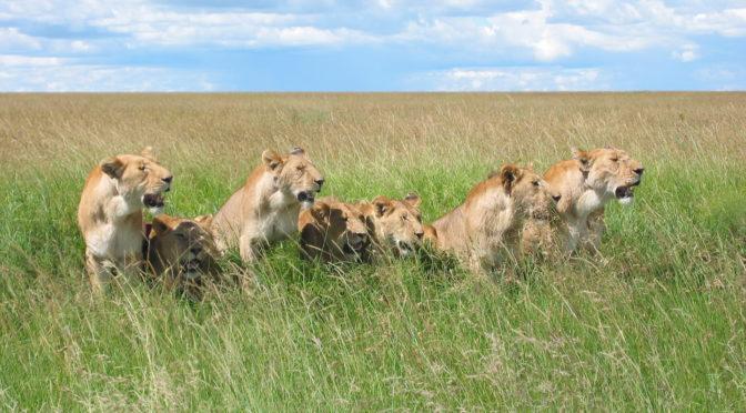 Glorify the Lions